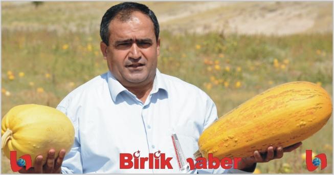 Aksaray'da Çerezlik Kabak Çekirdeği Hasadı Başladı