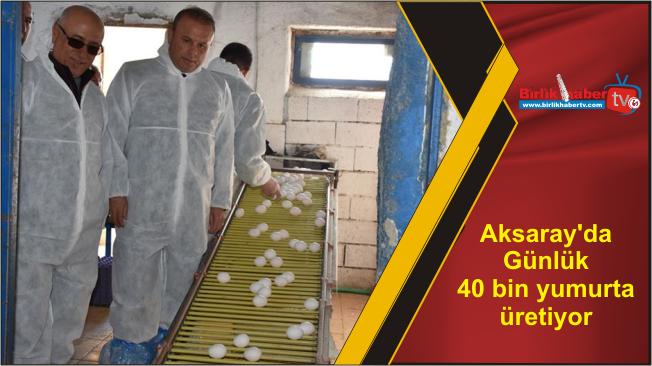 Aksaray'da Günlük 40 bin yumurta üretiyor