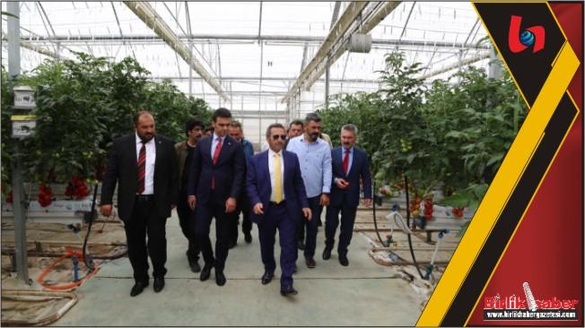 Vali Ali Mantı 12 ay domates üretimi yapılan seraları inceledi