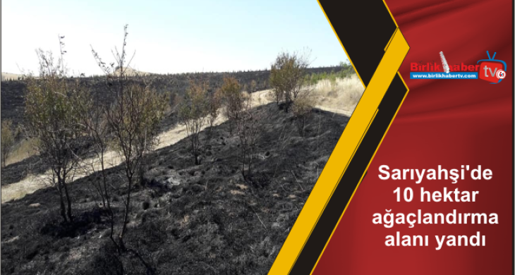 Sarıyahşi'de 10 hektar ağaçlandırma alanı yandı