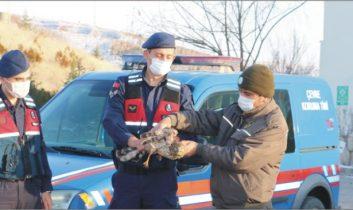 Yaralı Kuşa Jandarma sahip çıktı